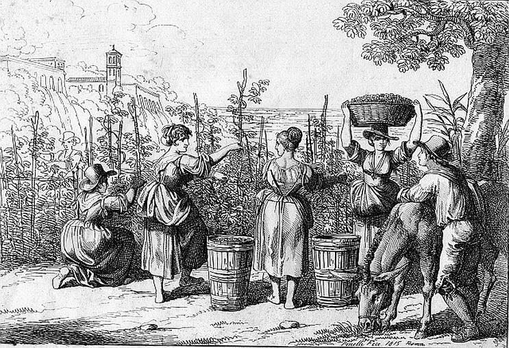 quá trình hình thành rượu vang