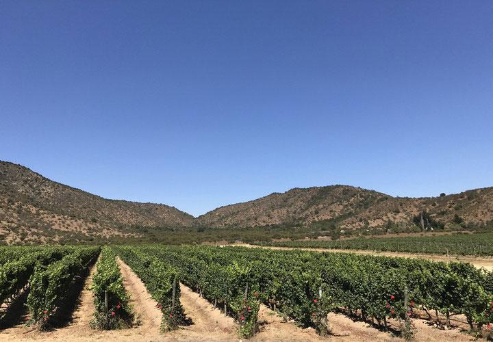 vùng trồng nho tại Chile