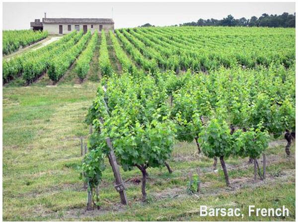 Barsac, French