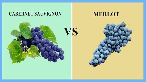Cabernet Sauvignon và Merlot