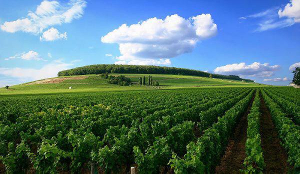 Vùng Burgundy