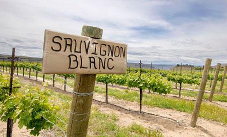 Vùng trồng nho Sauvignon Blanc