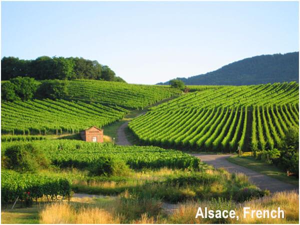 vùng sản xuất rượu vang ngọt Pháp, Alsace
