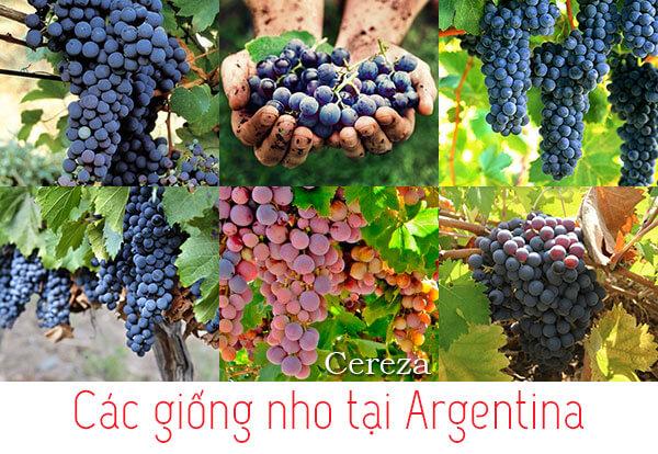 các loại nho tại vùng Argentina