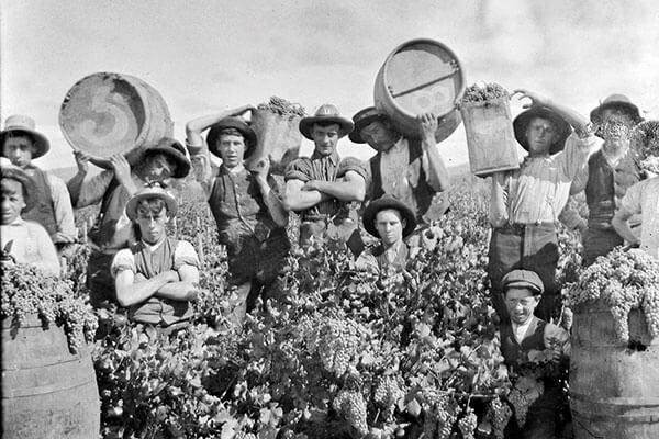 lịch sử hình thành rượu vang New Zealand