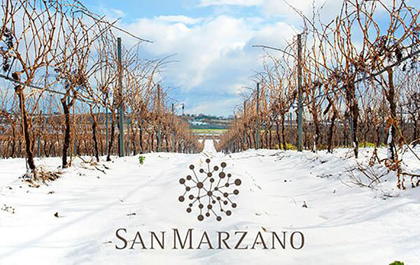 nhà sản xuất vang Cantine San Marzano