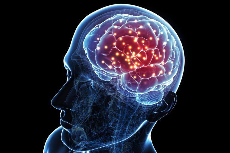 rượu vang có khả năng ngăn ngừa các tế bào thần kinh của não chết đi