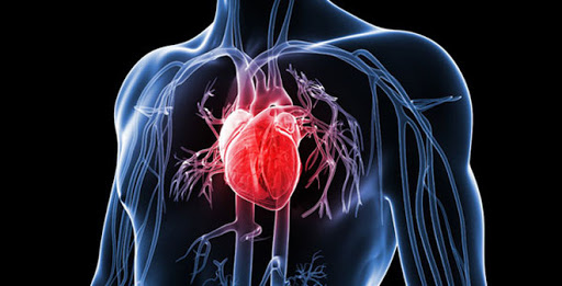 rượu vang có lợi cho tim mạch