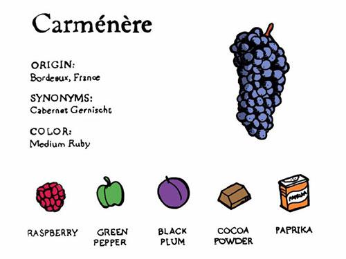 thành phần rượu vang-Carmenere