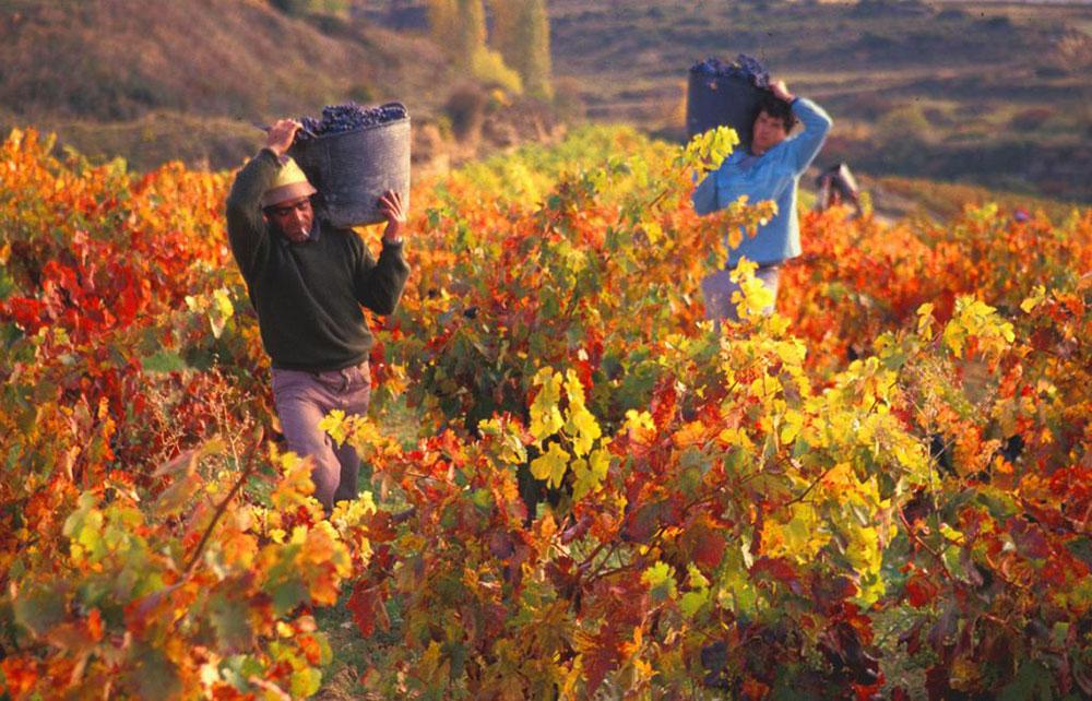Thung lũng Cachapoal trồng nho rượu vang