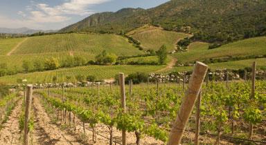 Thung lũng Colchagua