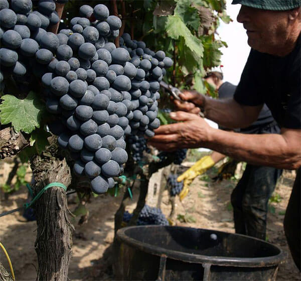 quy trình sản xuất Vindoro