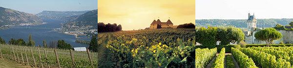 vùng trồng nho Pháp