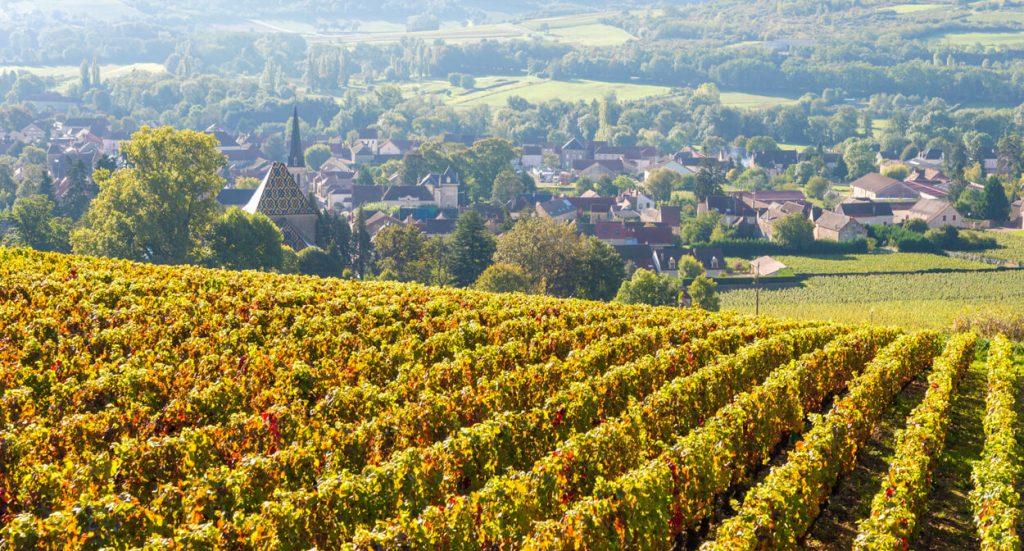 vùng trồng nho Bourgogne