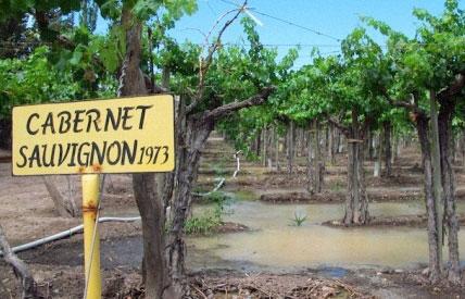 vùng trồng nho Cabernet Sauvignon