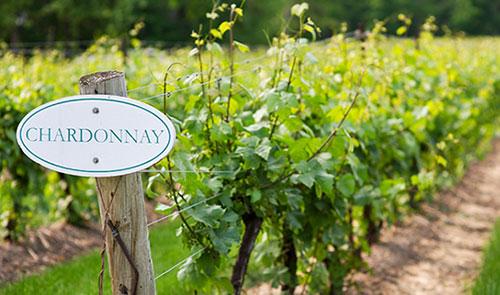 Vùng trồng nho Chardonnay