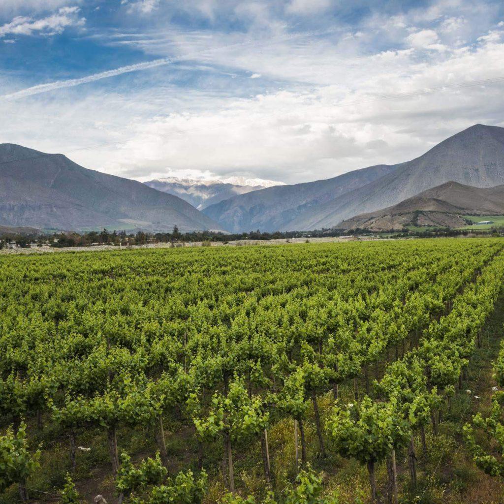 vùng trồng nho Limari - Chile