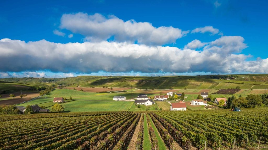 vùng trồng nho Loire Valley