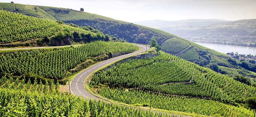 vùng trồng nho Rhône Valley