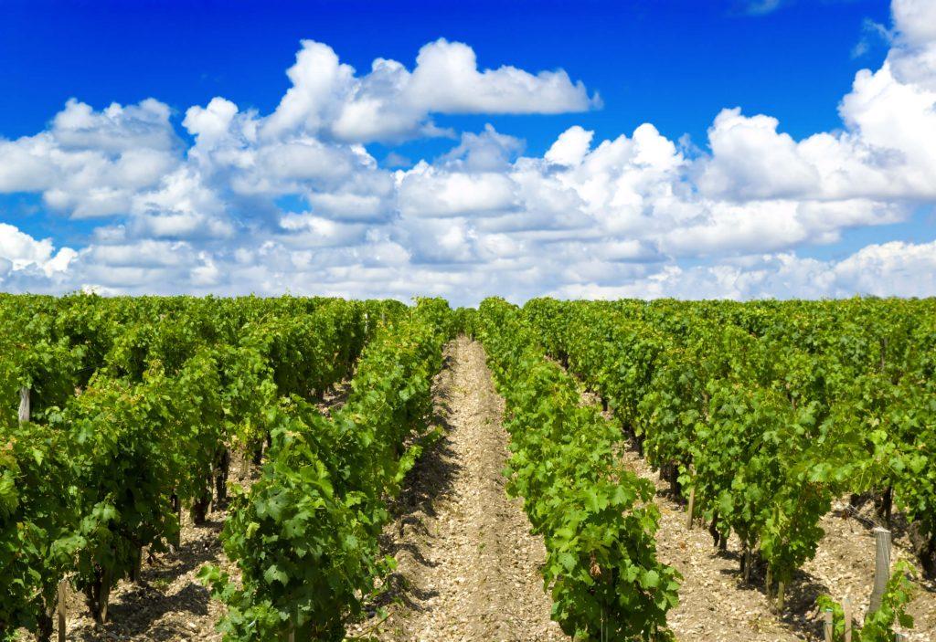 vùng trồng nho Bordeaux