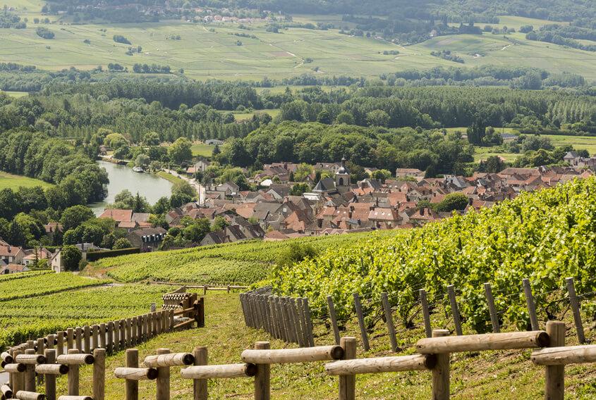 vùng trồng nho Champagne