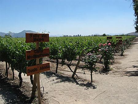 vùng trồng nho pha trộn