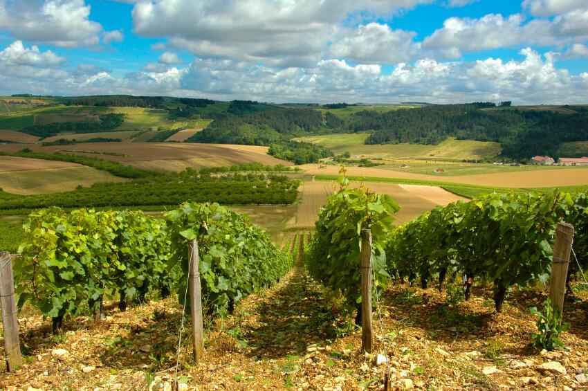 vùng trồng nho Provence