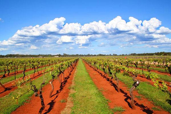 Coonawarra, Nam Úc